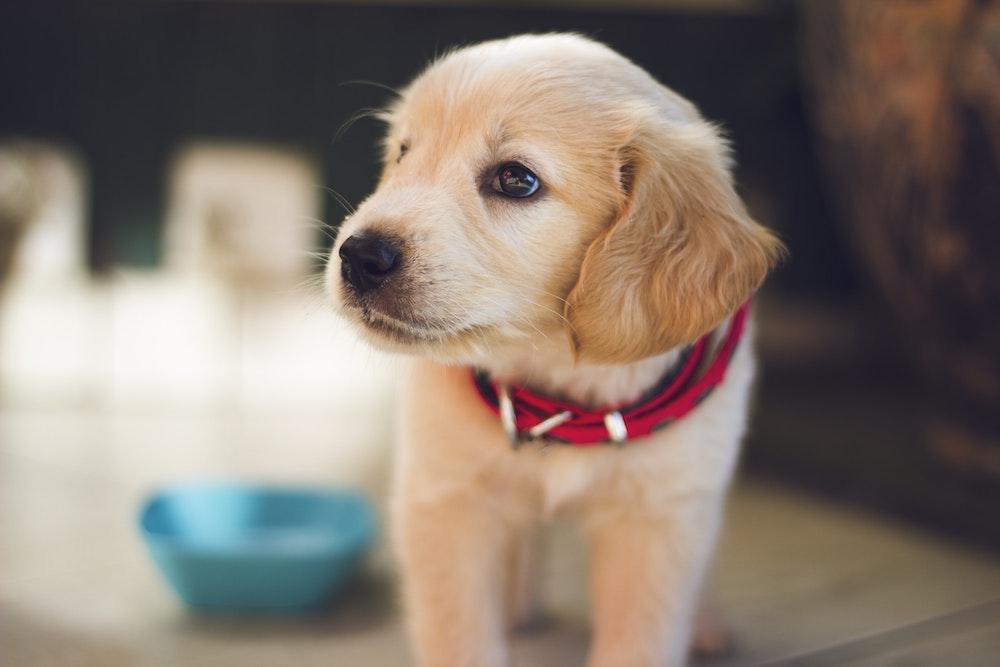 pet health insurance Little Rock AR